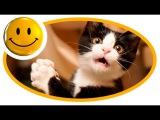 ❶ Приколы с животными, смешные видео ролики про животных 5th7b8