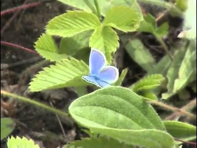 Волшебный мир родной природы Донецкий кряж