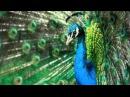 в мире животных-поль мориа-жаворонок