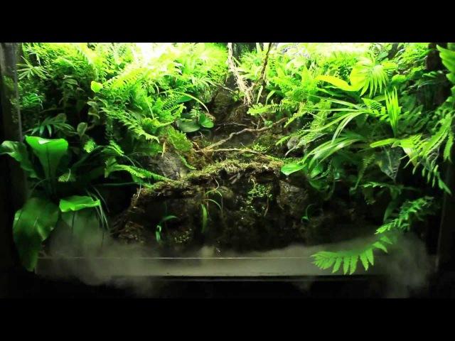 Waterfall Paludarium HD 1080p