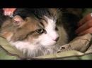 Введение в котоводство Animal Planet S03E04