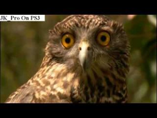 Walk on the wild side owls