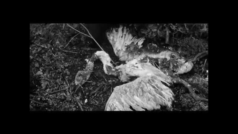 Аквариум - Волки и Вороны БГ Бэнд Борис Гребенщиков Рублёв Андрей Тарковский Рублев Andrei Tarkovsky