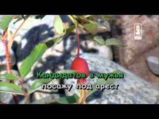 Ирина Аллегрова - Гарем петь караоке онлайн