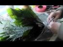 Состовление букета из лилии