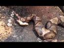 мертвая змея кусает сам себя. интересно