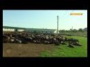 Видео новости Овцеводы развивают зеленый туризм в Одесской области Факты