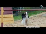 Планета собак 2015 год, серия 2. Ёлки лохматые