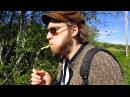 Гудёж в Норвегии