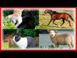 Отгадываем где домашние животные. Развивающее видео для детей. Мультик про зверюшек.Игра как Мультик