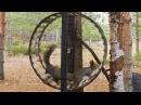 Белки в колесе