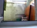 Кот подглядывает