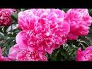 «Сад-огород » под музыку Сборная Союза [mp3crazy] - 8 Марта, Мужики.
