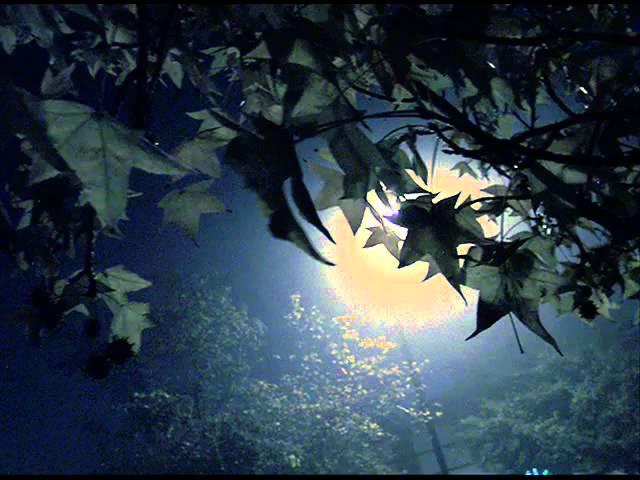Гори гори, моя звезда - Трио Реликт