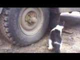 Том и Джерри (русская беспощадная версия) - Tired of playing cat and mouse_2