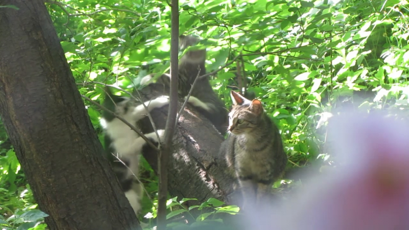 Кошки за окном. Мимимишки играют (2)