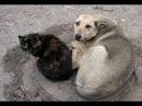 Бродячие собаки и кошки в Германии Жизнь в Германии