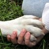 Союз Социально Ориентированных Собаководов