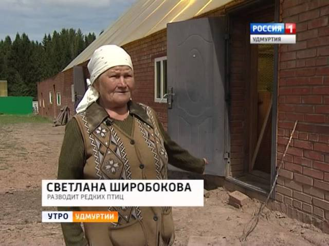 Павлины и цесарки Светлана Щиробокова разводит редких птиц 03 июня 2014