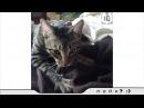 Супер смешные коты Видео приколы с котами Улетные животные
