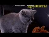 «Красивые Фото • fotiko.ru» под музыку Пополнения 2012 Алекс Спарк - Ты обо мне не забывай. Picrolla
