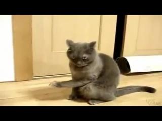 Все приколы про животных в одном видео. Смех до слёз