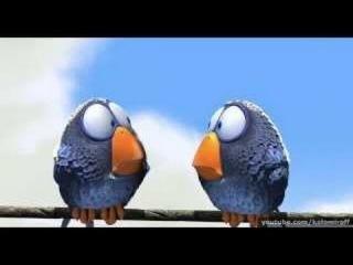 Птички! Смешно! Для детей и взрослых! Birdies! Funny cartoon! For children and adults!