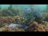 Королевство океанов 2011 Фильм Второй HD