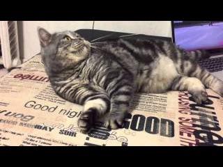 Game With Cat Masya. Игры С Котом По Имени Мася