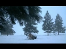 Кто сильнее пума или волк дикий мир и поведение животных в нем