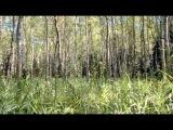 Аркадий Северный - Я в весеннем лесу...