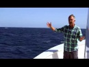 Blue Whales brilliant timing! - Big Blue Live Preview - BBC One