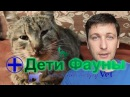 Ринотрахеит у кошек, лечение. Автор ветеринар
