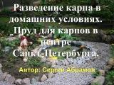 Разведение карпа в домашних условиях. Пруд для карпов в центре Санкт-Петербурга.