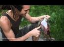 Хищник обедает сбитым кроликом - Eating Roadkill Rabbit