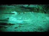 Giant Anaconda Attacks and Swallows Crocodile (Rare and Shocking)