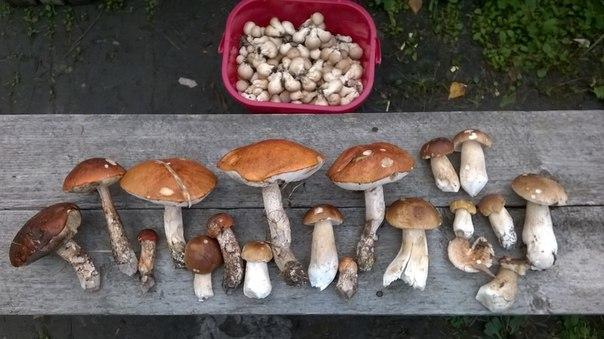Грибы и грибные блюда. - Страница 2 Z7vZuUlwePU
