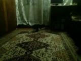 САМОЯ ВИСЬОЛАЯ ЖЫЗН КАТА И ЕВО ИГРУШКЕ!!!1/ Самая веселая жизнь кота
