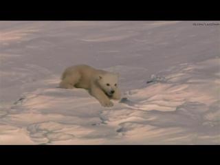 Замёрзшая планета. Белый медведь