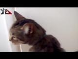 Подборка смешных мяукающих кошек 2014 - Самое смешное видео с кошками - Забавные животные видео