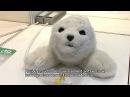 Cute Baby Seal Robot - PARO Theraputic Robot DigInfo