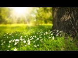 3 HOURS of Relaxing Celtic Fantasy Music   Peaceful Flute   for Relax, Meditation, Study, Pregnance