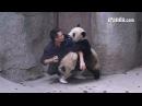Приставучие панды не отпускают смотрителя новости