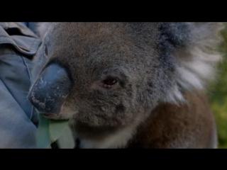 BBC   Становление континентов   Австралия   2013