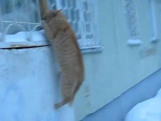 Кот-романтик_)