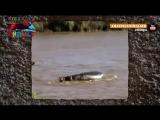 Бегемот спасает тонущего детеныша зебры. Бегемот спасатель _ Очень трогательно - YouTube [360p]