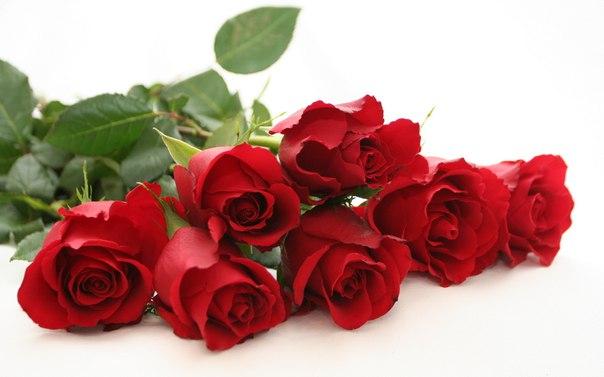 В ХМАО влюбленным, раздавшим прохожим 300 похищенных роз, грозит пятилетний срок колонии