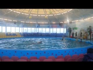 Дельфинарий в Минске - декабрь 2015