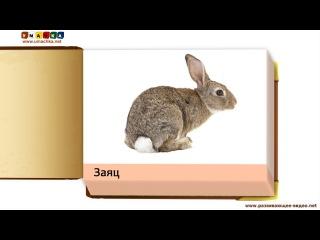 Учим названия животных - Презентации для детей