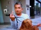 Переводчик с собачьего с Цезарем Миланом: таксы, лхаса апсо, английский бульдог